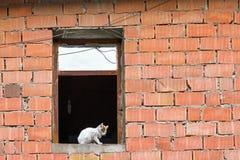 Tomcat en la ventana del edificio del facework del facework Fotografía de archivo