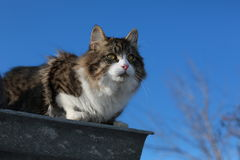 Tomcat en un fondo de las ramas de árbol Foto de archivo