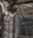 Tomcat en un fondo de las ramas de árbol Imagen de archivo