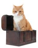 Tomcat fâché dans le coffre de trésor photo stock