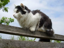 The tomcat on the fence. In the beautiful spring day Royalty Free Stock Photography