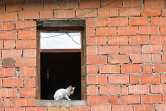 Tomcat im Fenster des Gebäudes von facework facework Stockfotografie