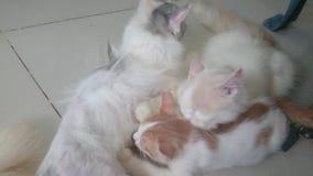 Tomcat ist für Kätzchen mitfühlend Stockbild