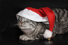 Tomcat with Jelly bag cap. Striped tomcat as santa claus with red jelly bag cap, isolated on black background royalty free stock photos