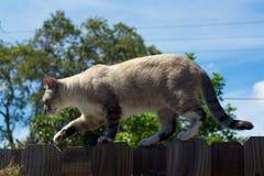 Tomcat odprowadzenie na ogrodzeniu fotografia royalty free