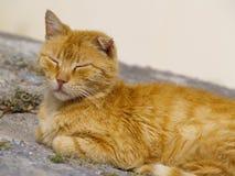 Tomcat parasite photographie stock