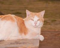 Tomcat plecy zaświecający evening słońce obrazy royalty free