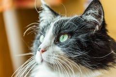 Tomcat portrait. Shallow depth of field, blur background Stock Photo