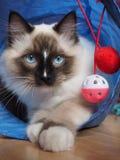 Tomcat Riky Στοκ εικόνες με δικαίωμα ελεύθερης χρήσης