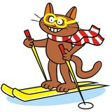 Tomcat and ski Royalty Free Stock Photography