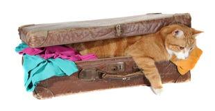 Tomcat Snoopy dans la vieille valise avec des vêtements photos libres de droits