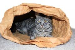Tomcat in un sacco di carta immagini stock libere da diritti