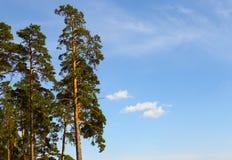 Tome el cuidado de la belleza de la naturaleza y del bosque Fotografía de archivo
