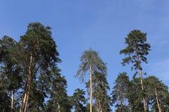Tome el cuidado de la belleza de la naturaleza y del bosque Imagen de archivo libre de regalías