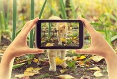 Tome el gato del rojo de las imágenes Imagenes de archivo