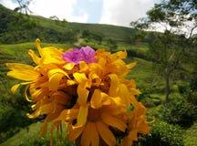 Tome flores com objetos do fundo do borrão fotografia de stock