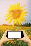 tome a foto com smartphone girassol amarelo nos óculos de sol com Fotos de Stock Royalty Free