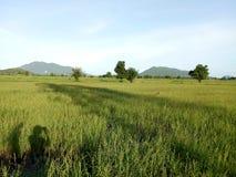Tome a foto a terra verde do arroz foto de stock royalty free