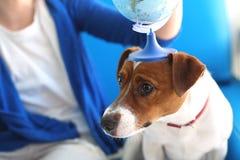 Tome su perro el vacaciones Imagen de archivo libre de regalías