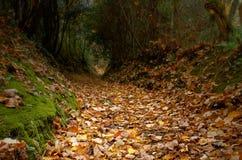 Tome uma caminhada na madeira Imagem de Stock