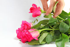 Tome uma rosa Fotos de Stock Royalty Free