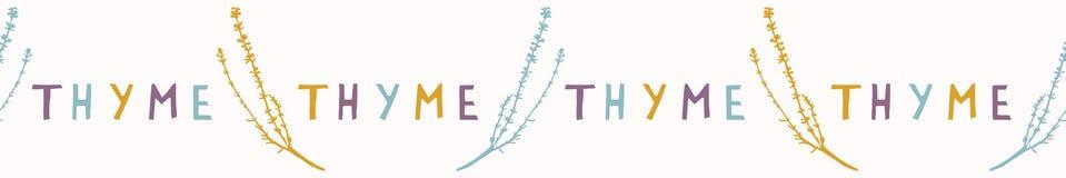 Tomilho sagrado Herb Leaf Seamless Vetora Border Planta espiritual tirada mão ilustração royalty free