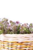 Tomillo en una cesta en el fondo blanco Fotografía de archivo