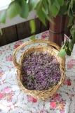 Tomillo siberiano de la planta de los pétalos en una cesta de mimbre Imagen de archivo