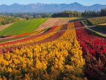 Tomita flower farm. Irodori field, Tomita flower farm, Nakafurano, Hokkaido, Japan Royalty Free Stock Image