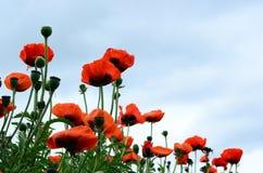 Tomita lantgård i Juni Royaltyfria Bilder