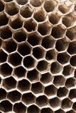 Tomma asp- celler Arkivfoton
