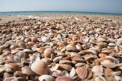 Tomma blandade snäckskal på havssanden arkivfoto