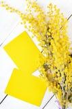 Tomma kort och mimosablommor Royaltyfria Bilder