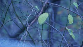 Tomma trädfilialer med få sidor i en kall höstdag lager videofilmer