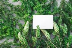 Tomma vita kort- och gräsplangranfilialer royaltyfri fotografi