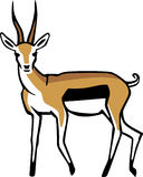 Tommie gazela Zdjęcia Royalty Free