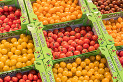 Tommies cherry tomatoes. Royalty Free Stock Images