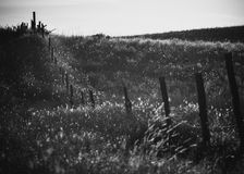 Tomorrow`s Daydream. A fence line silhouetted in surrounding grass basking in sunlight during an early sunset Stock Images