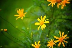 Tomou o tiro do jardim botânico em ooty Fotografia de Stock