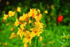Tomou o tiro do jardim botânico em ooty Foto de Stock