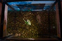 tomt akvarium fotografering för bildbyråer