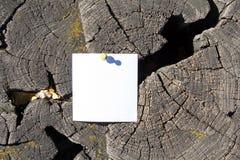 Tomt ark av papper på den gamla spruckna stubben Arkivbilder