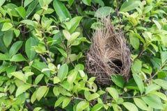 Tomt fågelrede på träd royaltyfri bild