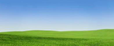 Tomt grönt fält arkivfoto