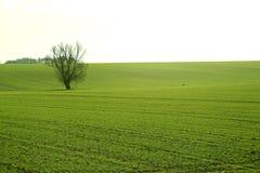 Tomt grönt fält royaltyfria bilder