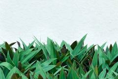 Tomt kopieringsutrymme för text - vit färgvägg på bakgrund av den tjocka gräsplansidamodellen Arkivfoto
