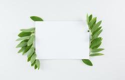 Tomt kort med nya gräsplansidor på vit Arkivbilder