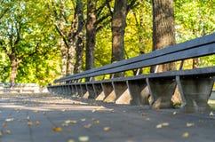 Tomt parkera bänkar i Sunny Autumn Day With Golden Leaves i träd, Lettland, Europa, begrepp av att koppla av loppdag i fred och arkivfoton