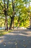 Tomt parkera bänkar i Sunny Autumn Day With Golden Leaves i träd, Lettland, Europa, begrepp av att koppla av loppdag i fred och royaltyfria bilder