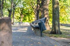 Tomt parkera bänkar i Sunny Autumn Day With Golden Leaves i träd, Lettland, Europa, begrepp av att koppla av loppdag i fred och royaltyfri bild